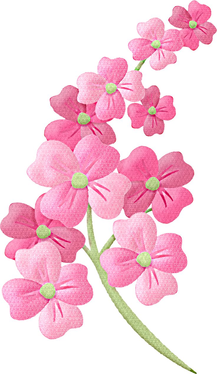 Clipart photos of flowers.  best ideas about