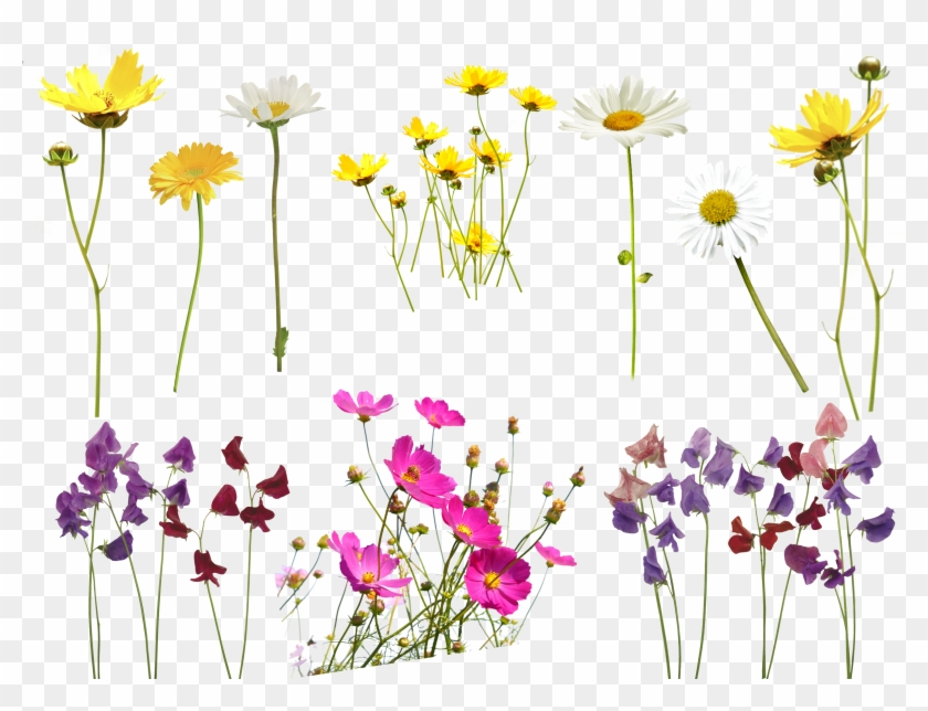 Flower clipart for photoshop banner royalty free download Flower Overlay Png Transparent Background - Photoshop Flower Overlay ... banner royalty free download
