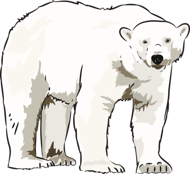 Clipart pictures of polar bears image transparent 64 Free Polar Bear Clipart - Cliparting.com image transparent