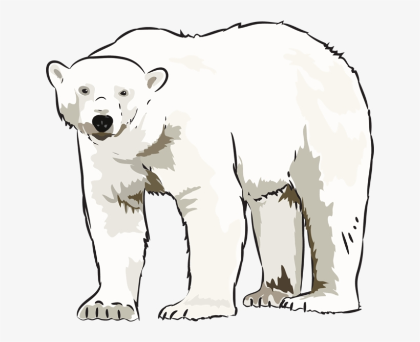 Clipart pictures of polar bears picture library Art Polar Bear Clipart Kid - Art - Free Transparent PNG Download ... picture library