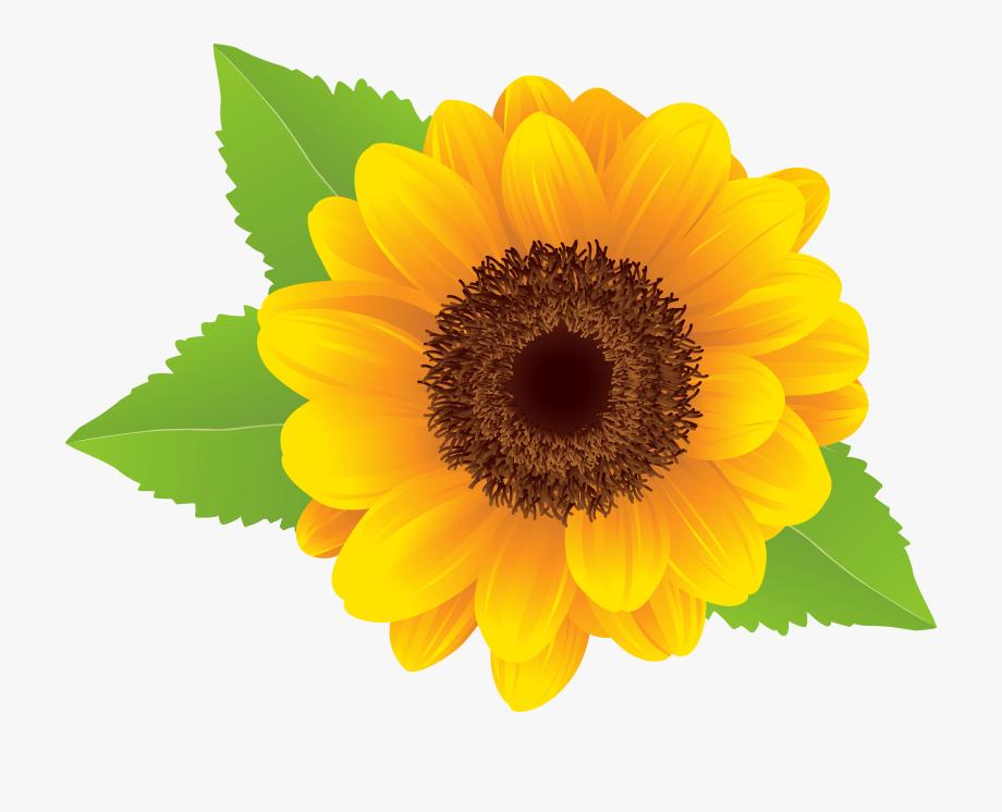 Sunflower clipart transparent clipart stock Sunflower Clipart Flower - Transparent Background Sunflower Clipart ... clipart stock