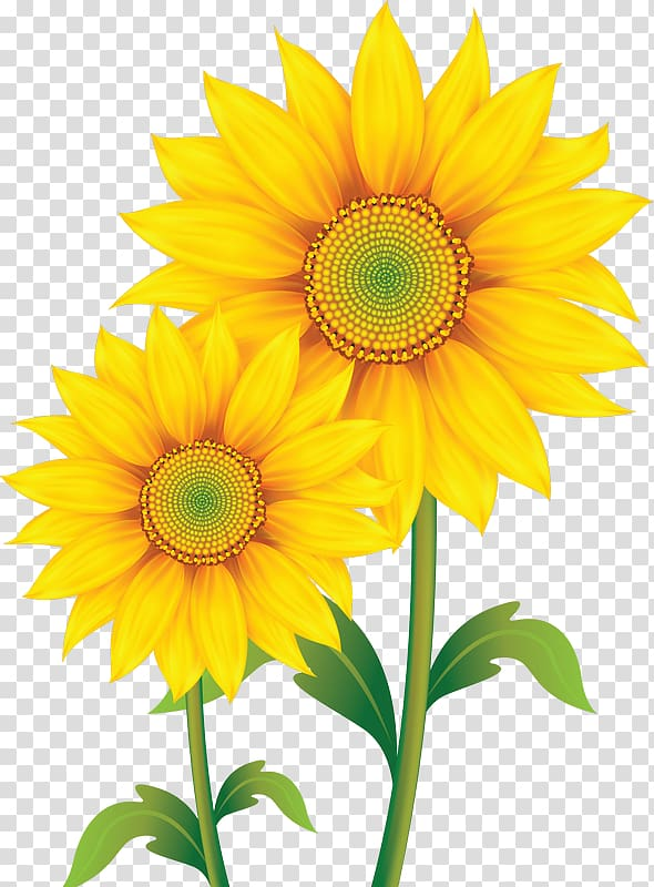 Sunflower background clipart picture library Common sunflower Sunflower seed, Dwarf transparent background PNG ... picture library