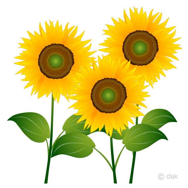 Cliparts sun flowers clip library stock Three Sunflowers Clipart Free Picture|Illustoon clip library stock