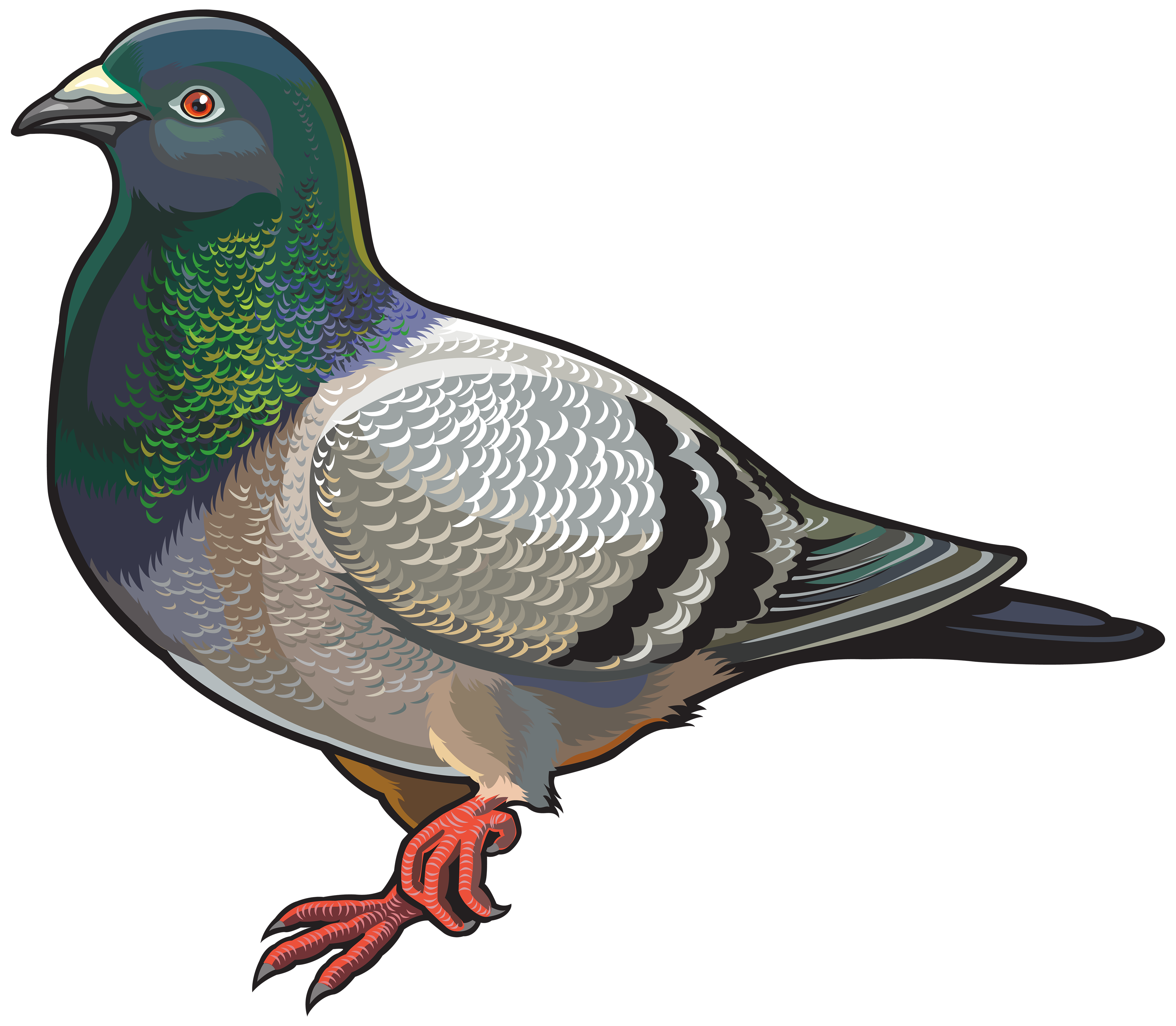 Clipart pidgeon png free stock Pigeon PNG Clipart - Best WEB Clipart png free stock