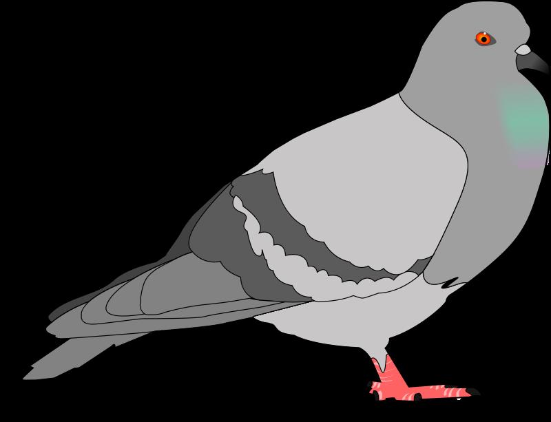 Piegeon clipart png transparent Free Clipart: Pigeon | jondkoon png transparent