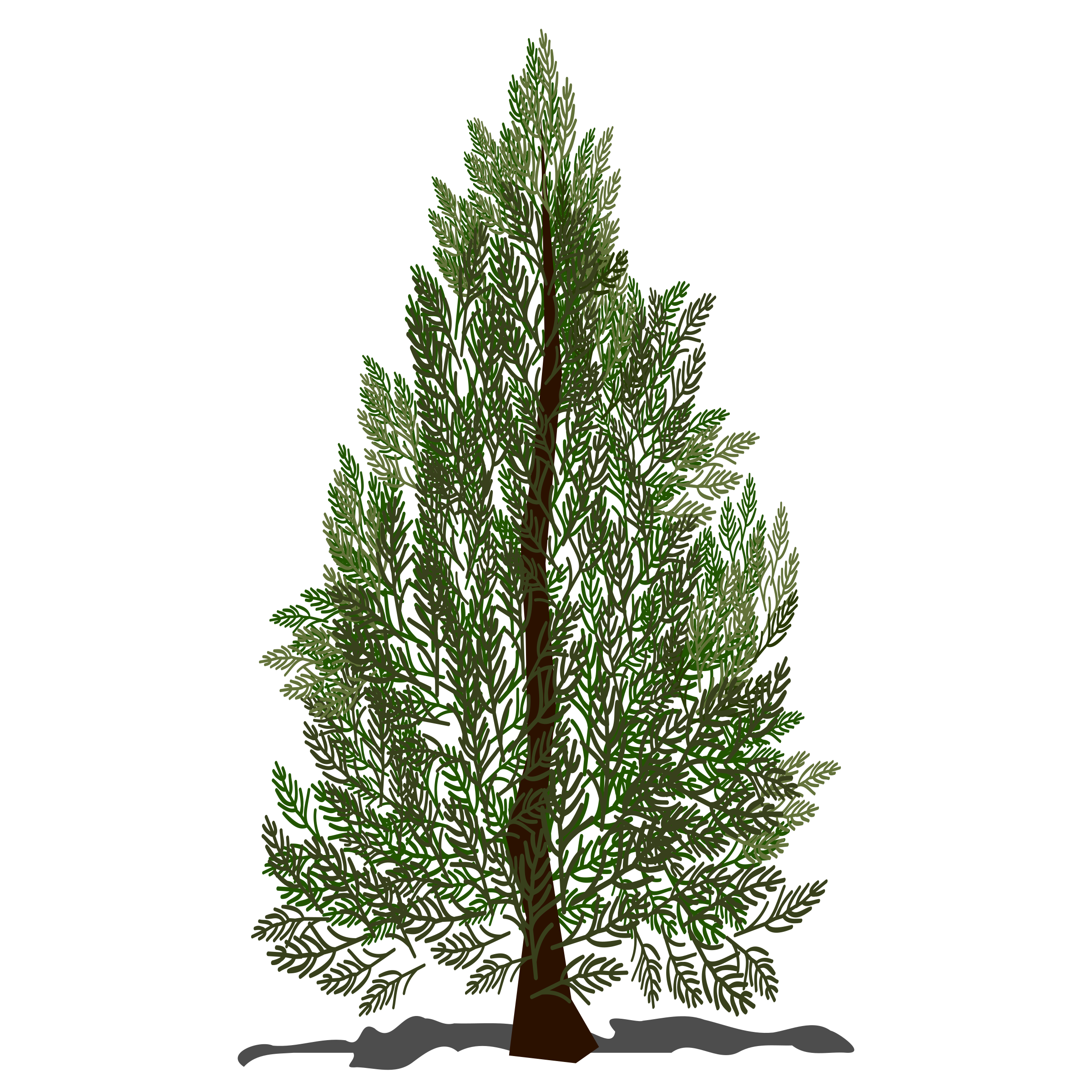 Clipart - Pine tree clipart freeuse stock
