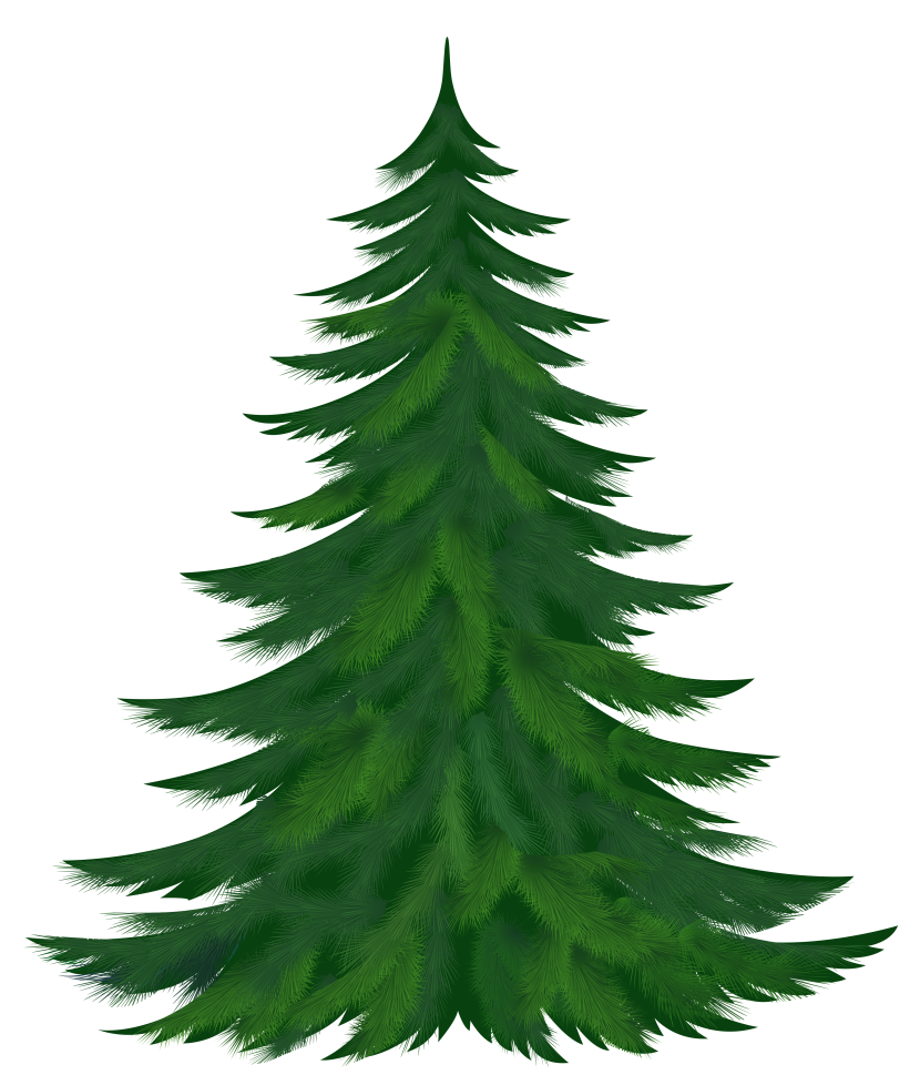 Spruce tree clipart freeuse stock Pine tree clipart - Clipartix freeuse stock