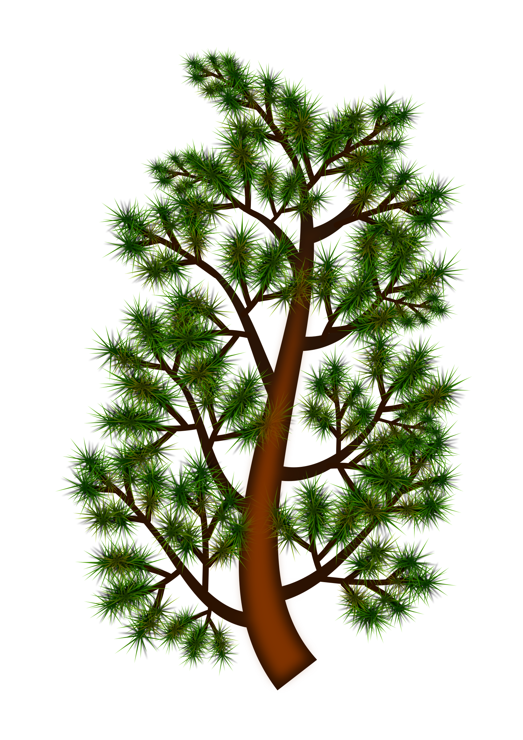 Loblolly pine tree branch clipart banner transparent Clipart - Pine tree branch banner transparent