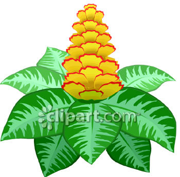 Clipart plants and flowers png black and white stock Flowering Plant With Flowers Shaped Like a Pineapple - Royalty ... png black and white stock