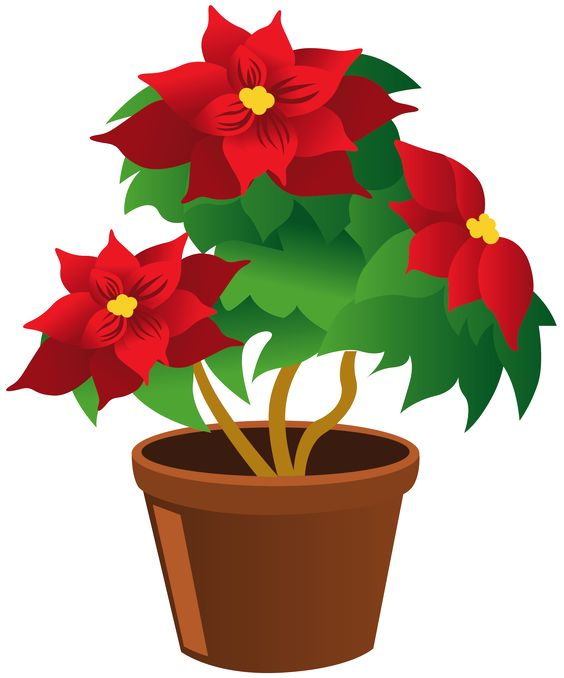 Clipart plants and flowers picture transparent library Poinsettia_Pot_PNG_Clipart | ✿° my garden valley ° ✿ | Pinterest ... picture transparent library