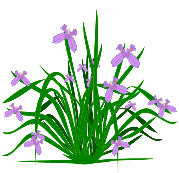 Flower plant clipart jpg Free clipart plants and flowers - ClipartFest jpg