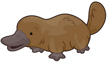 Clipart platypus vector royalty free download Free Platypus, Download Free Clip Art, Free Clip Art on Clipart Library vector royalty free download