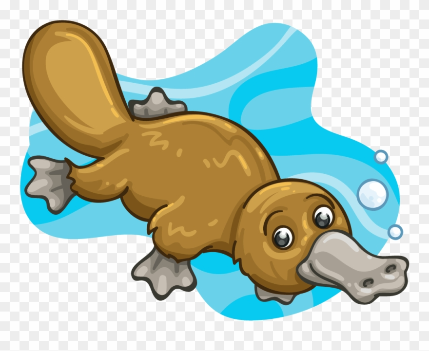 Clipart platypus png freeuse download Mammal Clipart Platypus - Platypus - Png Download (#714297) - PinClipart png freeuse download