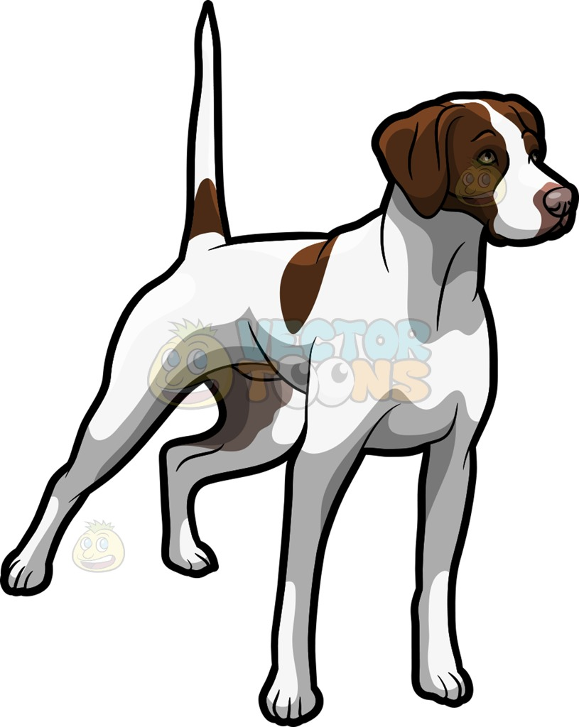 Clipart pointer dog picture black and white download An Alerted German Shorthaired Pointer Pet Dog Cartoon Clipart picture black and white download