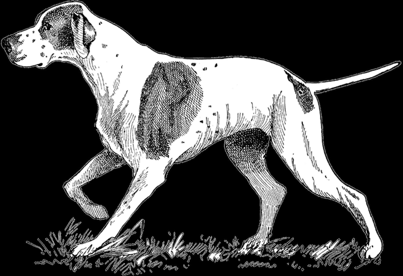 Vintage dog clipart