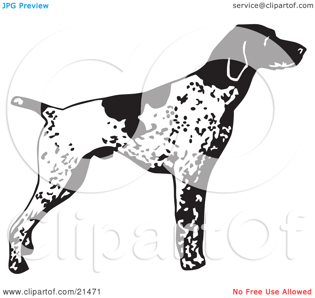Clipart pointer dog. Illustration of an alert