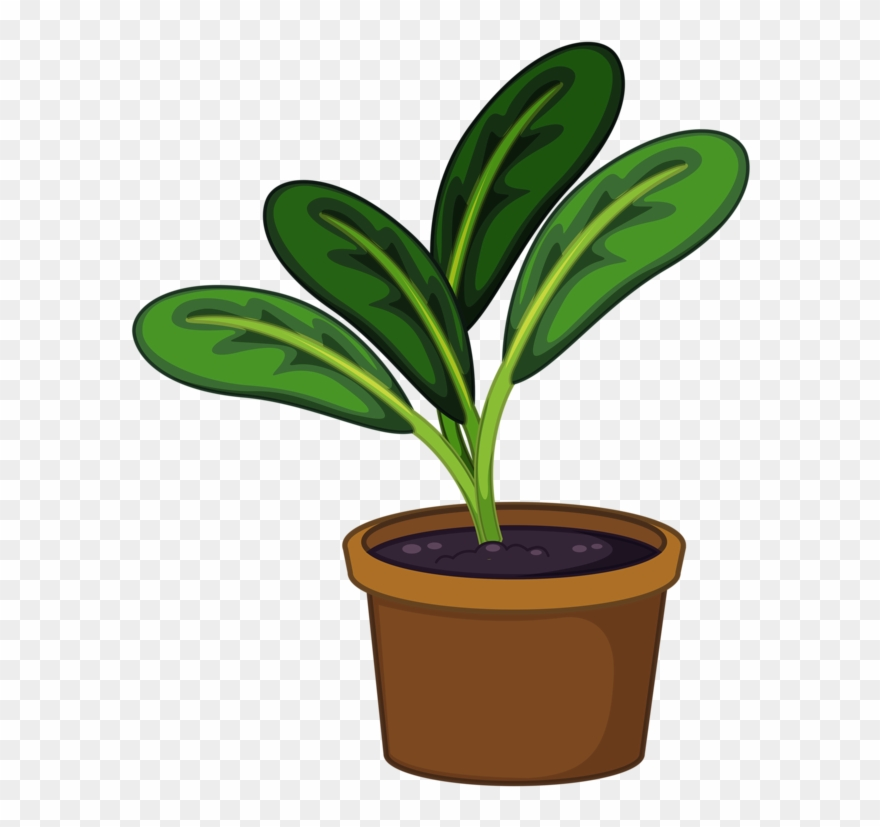 Plants transparent clipart image royalty free download Pot Plant Clipart Transparent - Plants In Pots Clipart - Png ... image royalty free download