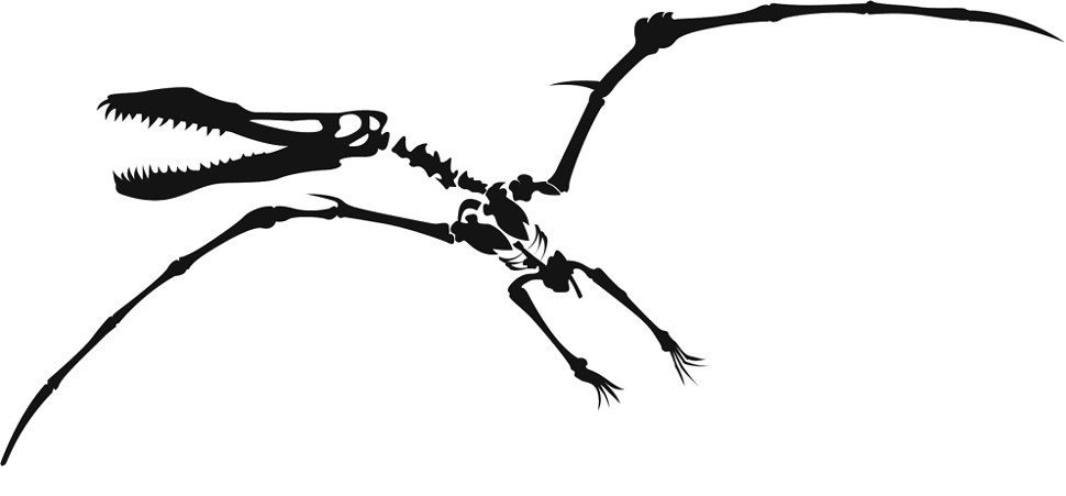 Clipart pterodactyl pile black and white library Fossils Clipart   Free download best Fossils Clipart on ClipArtMag.com library