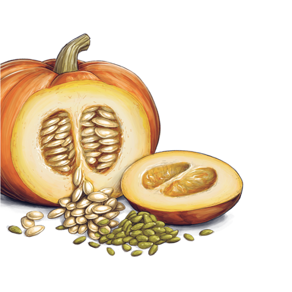 Pumpkin seed clipart clip free stock Pumpkin Seeds PNG Transparent Images | PNG All clip free stock
