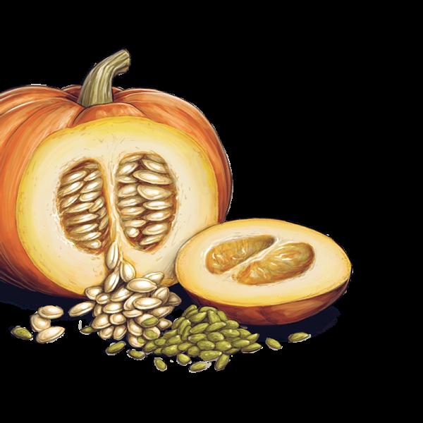 Free pumpkin seed clipart image download Pumpkin Seeds PNG Transparent Images | PNG All image download