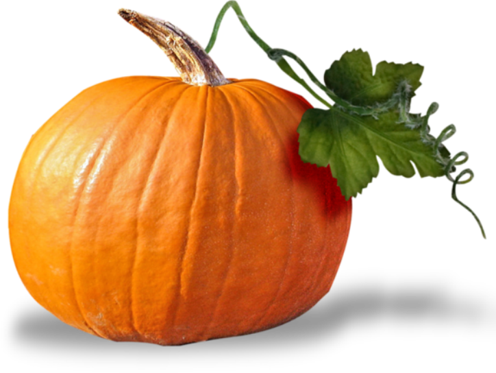 Pumpkin seed clipart vector library library Cucurbita Pumpkin seed oil Squash Clip art - pumpkin 724*544 ... vector library library