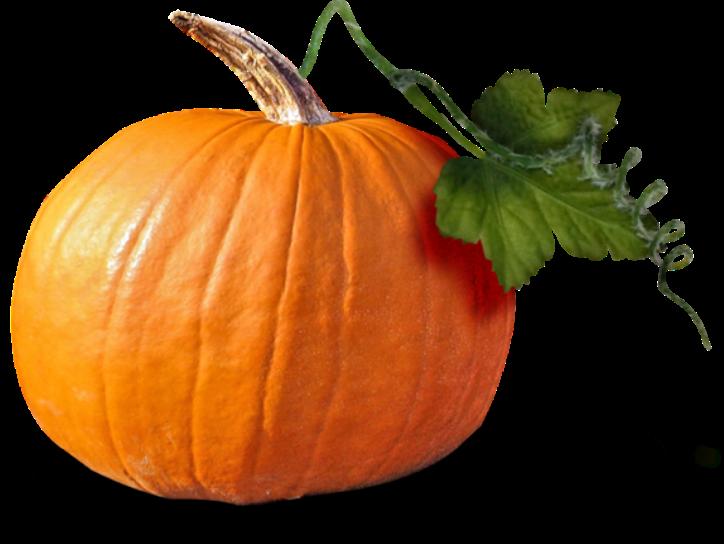 Free pumpkin seed clipart image library download Cucurbita Pumpkin seed oil Squash Clip art - pumpkin 724*544 ... image library download