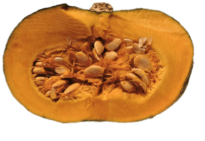 Pumpkin seed clipart banner freeuse library Half Pumpkin With Visible Seeds transparent PNG - StickPNG banner freeuse library