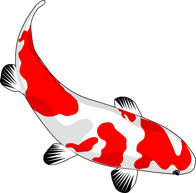 Sunny fish clipart clip library download Free Image on Pixabay - Fish, Koi, Red, White, Nishikigoi ... clip library download