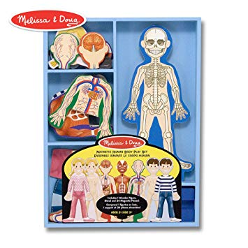 Clipart representing the changing potrayal of the human body svg royalty free library Melissa & Doug Magnetic Human Body Anatomy Play Set (Anatomically Correct  Boy and Girl Magnets, 24 Magnetic Pieces and Storage Tray) svg royalty free library
