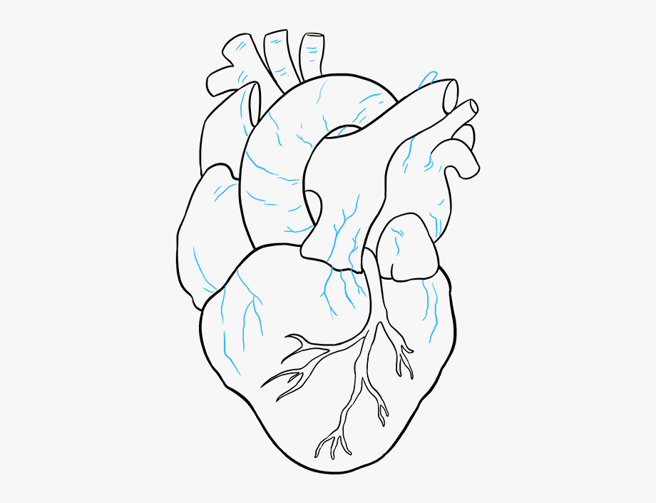 Clipart resolution 900 736 drawings clipart drawing vector royalty free download How To Draw A Human Heart - Human Heart Easy Drawing #933352 - Free ... vector royalty free download
