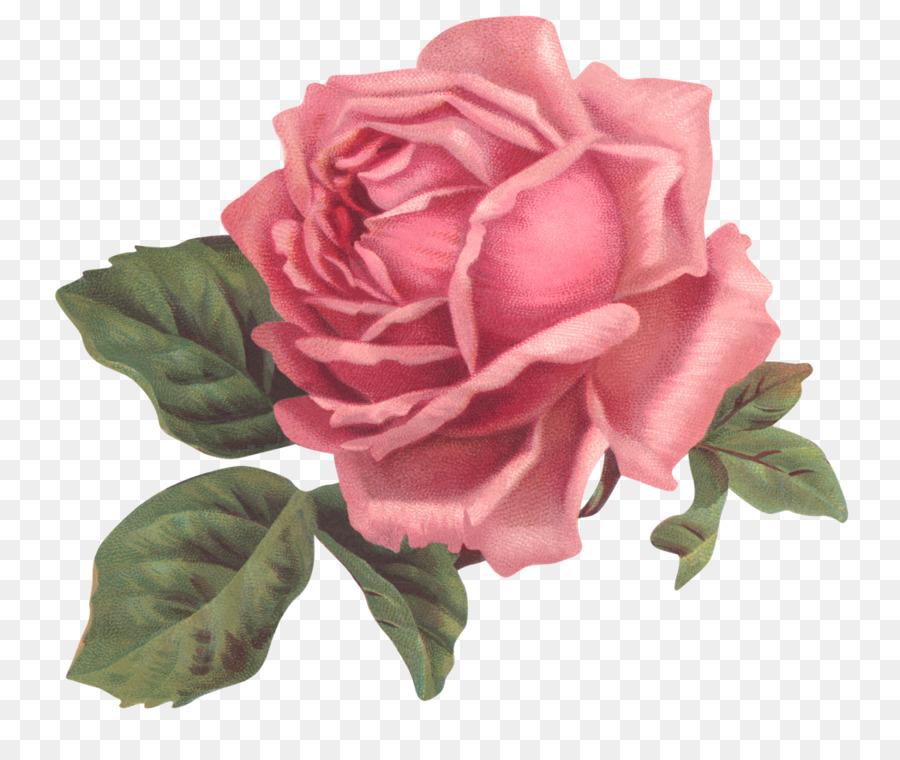 Clipart rosa jpg black and white Pink Flower Cartoon clipart - Rose, Flower, Pink, transparent clip art jpg black and white