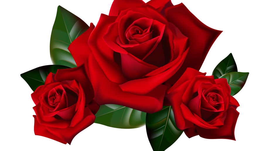 Rose hd clipart vector royalty free library Red Roses Png Clipart Picture Hd Desktop Wallpaper Widescreen ... vector royalty free library