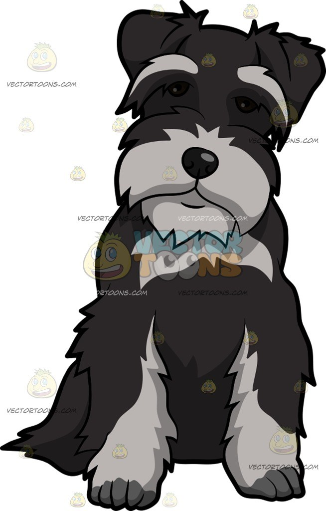 Clipart schnauzer banner royalty free stock An Intrigued Miniature Schnauzer Dog » Clipart Portal banner royalty free stock