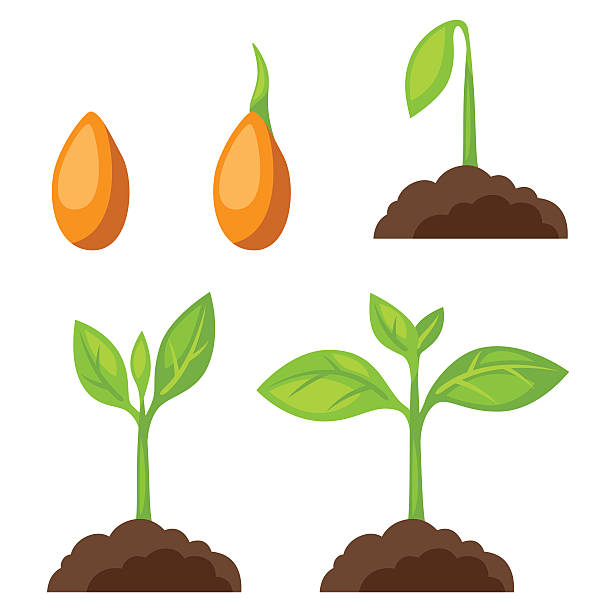 Clipart seed clip library stock Seed clipart 1 » Clipart Station clip library stock