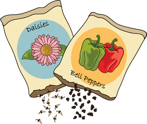 Clipart seed packets graphic stock Clipart Illustration of Bell Pepper and Daisy Seed Packets | Garden ... graphic stock