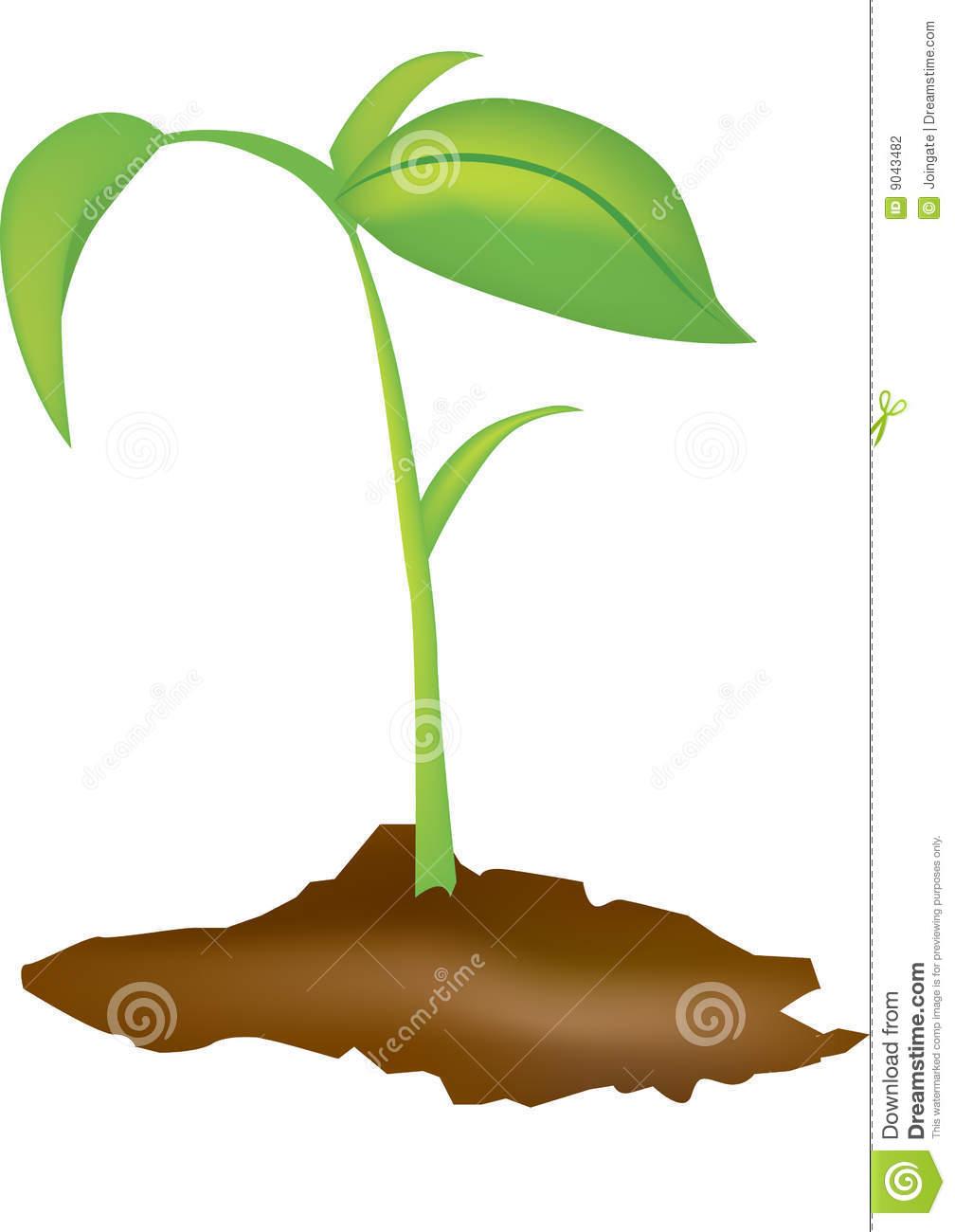 Clipart seedling clipart freeuse Seedling | Clipart Panda - Free Clipart Images clipart freeuse