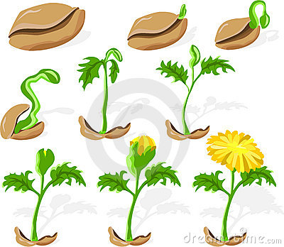 Clipart seed image royalty free download Seed Clip Art Free | Clipart Panda - Free Clipart Images image royalty free download