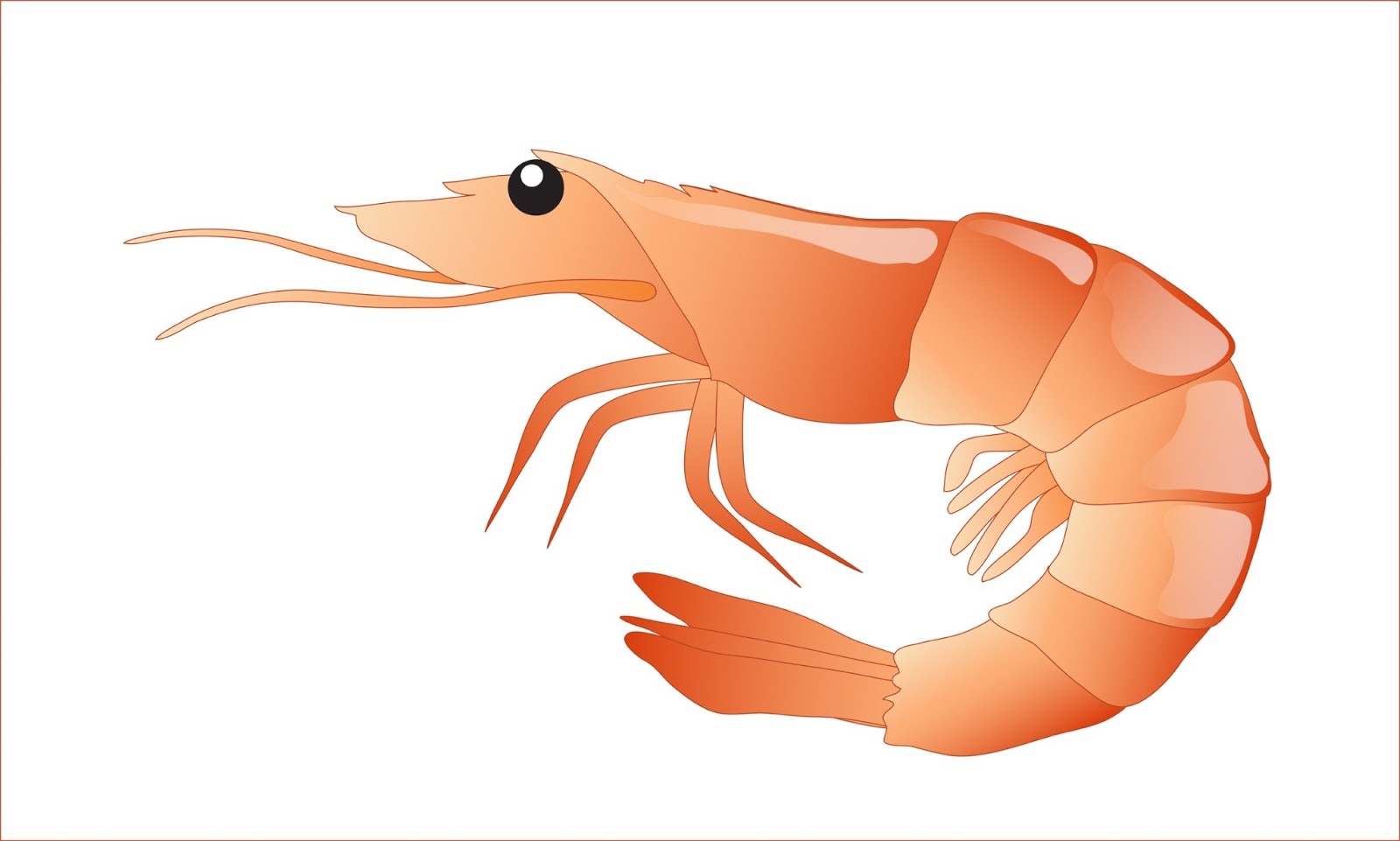 Clipart shrimp clipart transparent Free Shrimp Clipart, Download Free Clip Art, Free Clip Art on ... clipart transparent