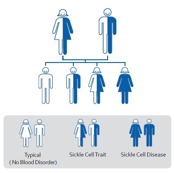 Clipart sickle cell anemia inherited from both parents clip freeuse library What is Sickle Cell Disease? – MTS Sickle Cell Foundation, Inc. clip freeuse library