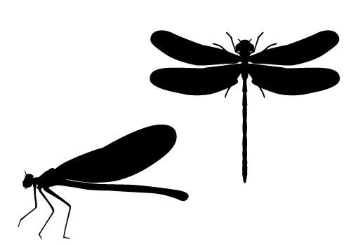 Free clipart dragonfly silhouette clip black and white stock Dragonfly Silhouette Vector in Marshes Free Download | Silhouette ... clip black and white stock