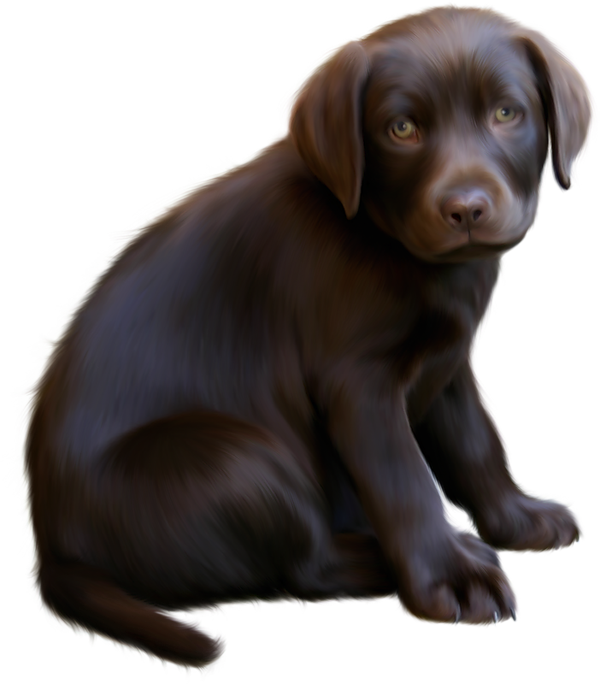 Puppy dog eyes clipart clipart download Cute Little Brown Dog with Blue Eyes Clipart clipart download