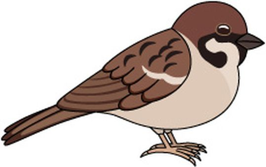 Clipart sparrows vector freeuse library Image result for clip art of sparrow | Sparrows | Disney characters ... vector freeuse library