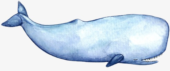 Clipart sperm whale clip royalty free library Sperm whale clipart 7 » Clipart Station clip royalty free library