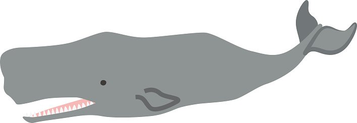 Clipart sperm whale graphic black and white Sperm Whale premium clipart - ClipartLogo.com graphic black and white