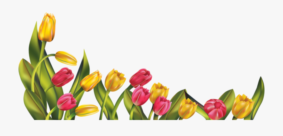 Free Spring Flower Border Clipart - Tulips Png #133675 - Free ... clipart library library