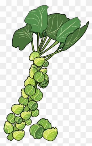 Clipart sprouts clip art freeuse download Brussels Sprouts - Brussels Sprout Clipart (#994889) - PinClipart clip art freeuse download