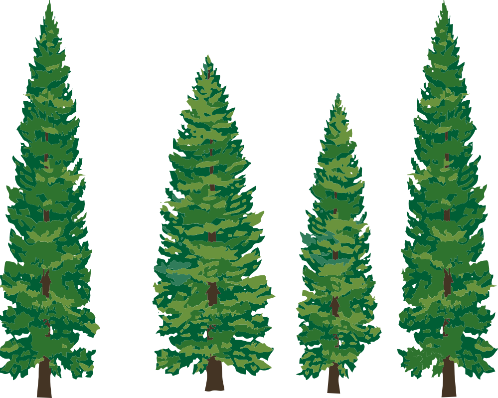 White pine tree clipart picture library download Pine Tree Clipart | Clipart Panda - Free Clipart Images picture library download