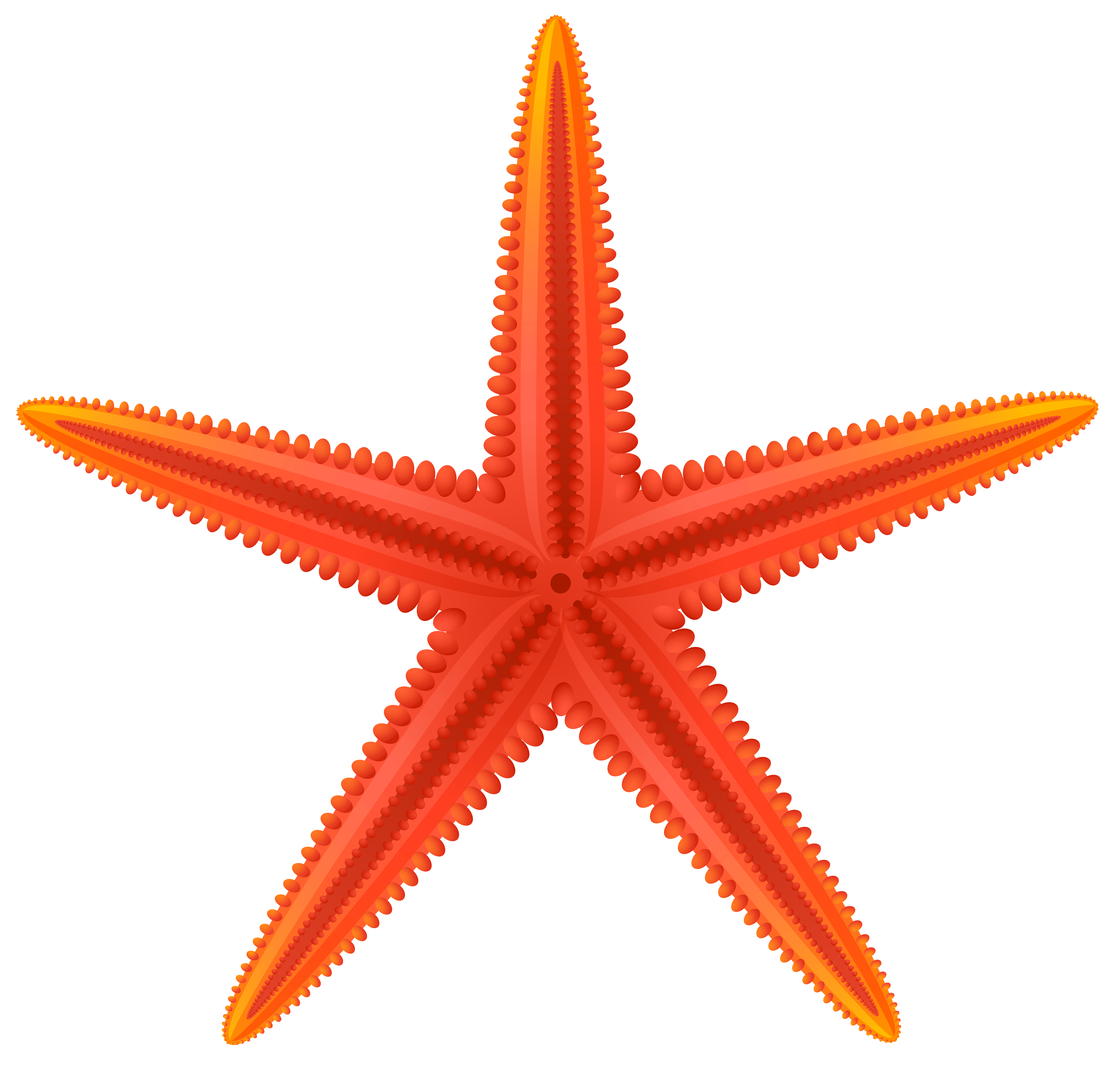Clipart star fish banner royalty free Red Starfish PNG Clip Art - Best WEB Clipart banner royalty free