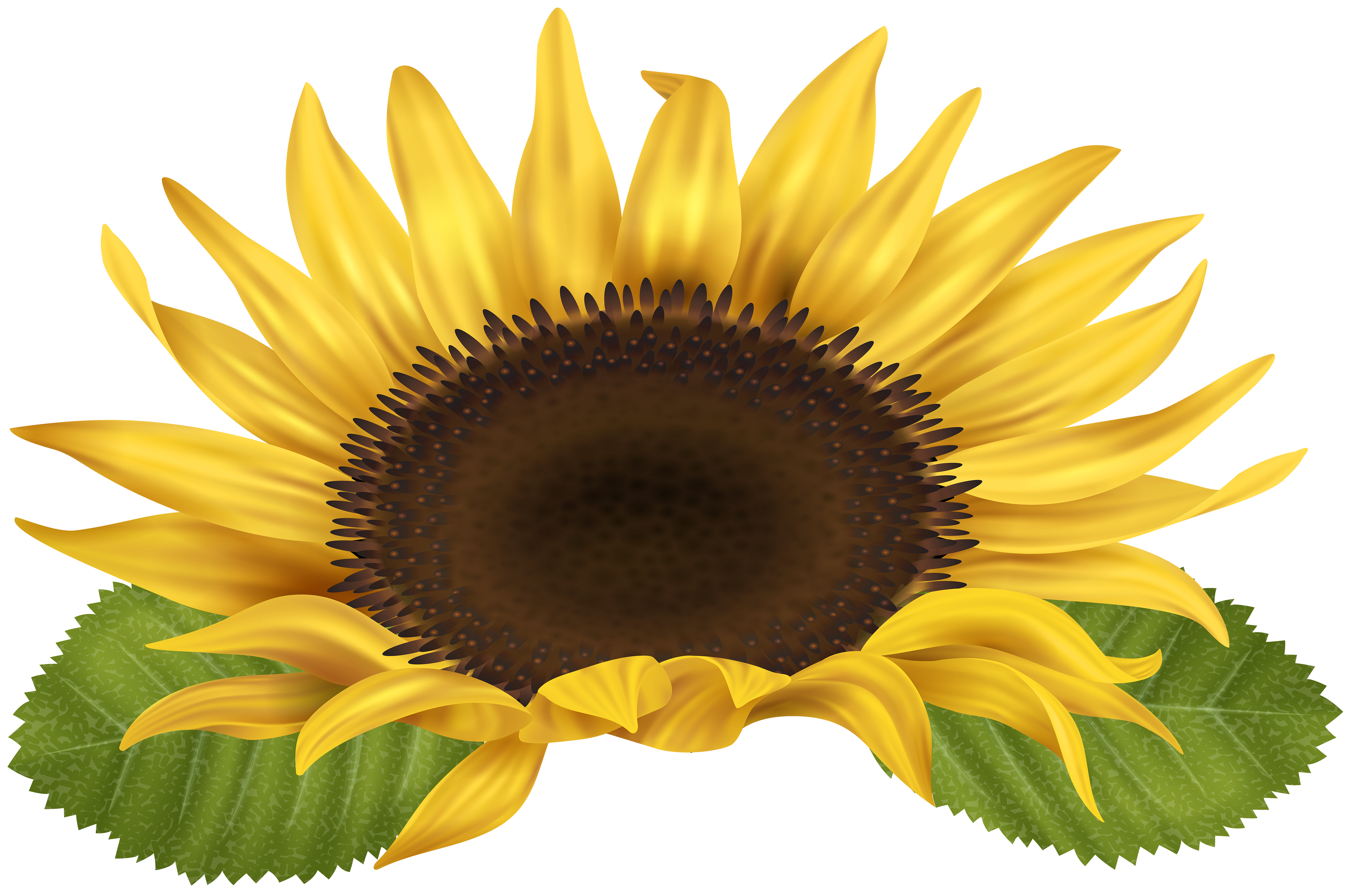 Sun flower clipart clip art free stock Sunflower PNG Clip Art Image | Gallery Yopriceville - High-Quality ... clip art free stock