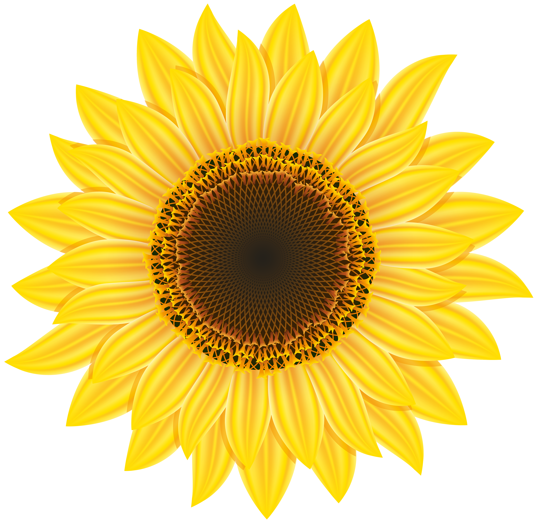 Clipart sun on flowers graphic stock Sunflower PNG Clipart - Best WEB Clipart graphic stock
